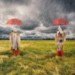 Stenzo Jersey Stoff Digitaldruck Pony im Regen großes Panel