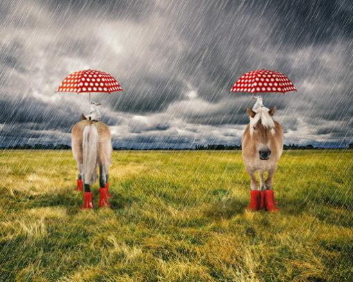 renee-d.de Onlineshop: Pony Jersey