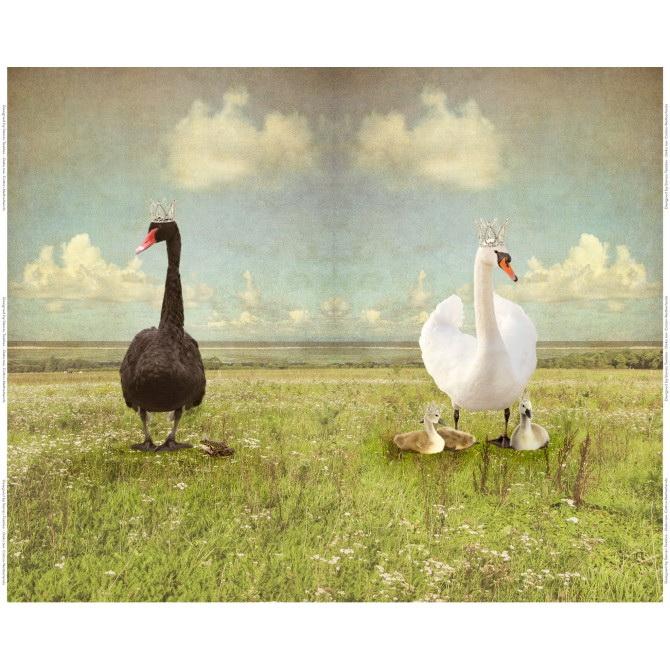 Stenzo Jersey Stoff Digitaldruck Black Swan großes Panel