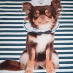 Stenzo Jersey Stoff Digitaldruck Hund blau weiß gestreift kleines Panel