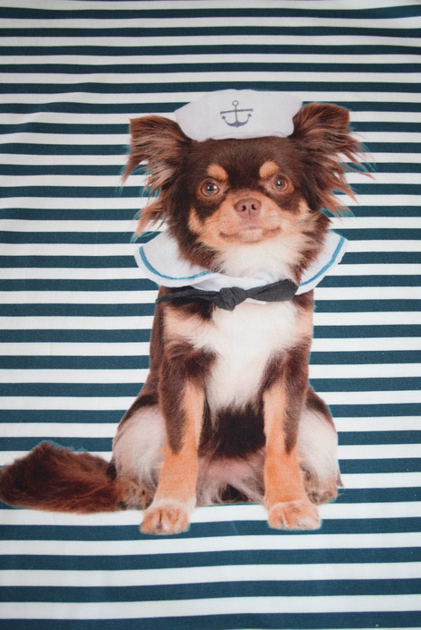 renee-d.de Onlineshop: Stenzo Marine Hunde Jersey Panel