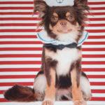 Stenzo Jersey Stoff Digitaldruck Hund rot weiß gestreift kleines Panel
