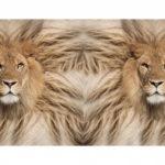Jersey Stoff Digitaldruck Löwen  kleines Panel