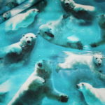 Digitaldruck Jersey Stoff Eisbären schwimmen