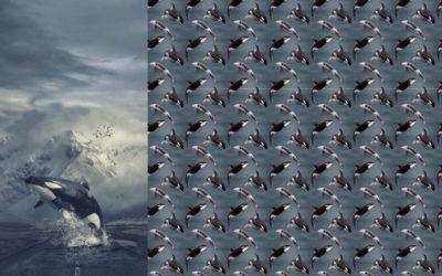Orca Jersey Panel!