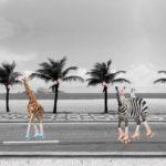 Stenzo Jersey Stoff Panel Zebra Giraffe grau
